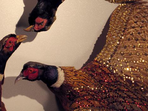 Pheasants03