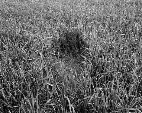 Grassbed2