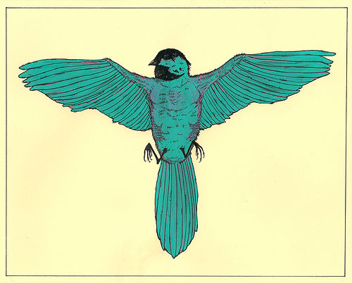 Studyofararebird
