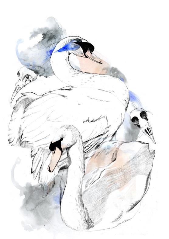 Swanpicture
