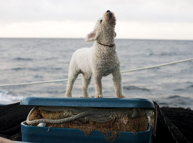 Purse_Seine_Guardian