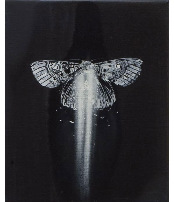 Betra-favral_moth