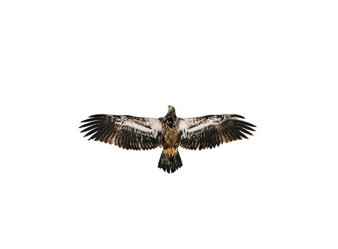 Eagle_Welcome