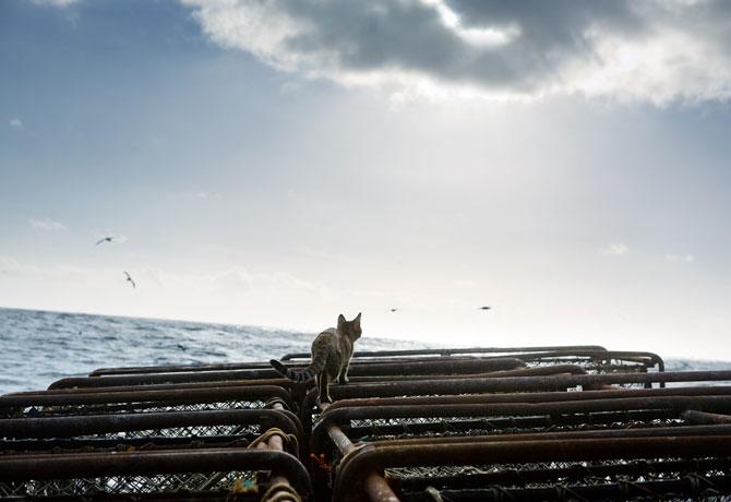 Sea_Kittys_Journey