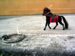 Horseblack