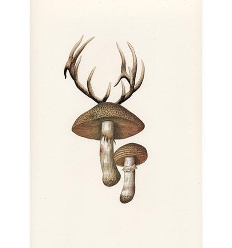 Antlershroom